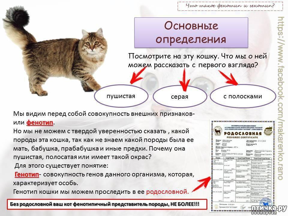 Основные отличия мордочек кошек и котов: как самостоятельно отличать пол