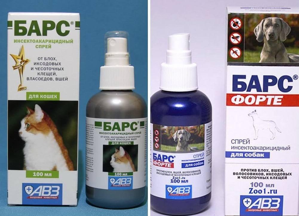 Капли от блох для кошек - способ применения и обзор лучших средств от эктопаразитов