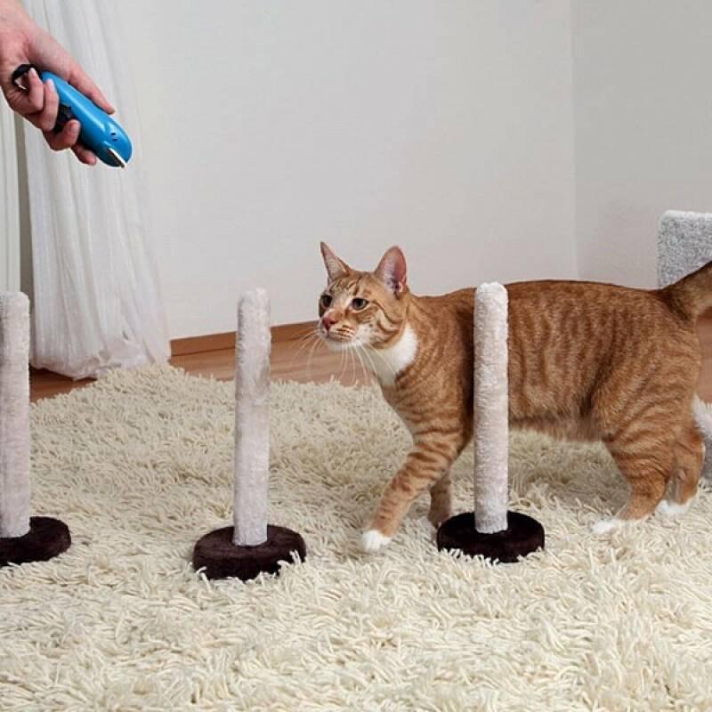 Дрессировка кошек в домашних условиях для начинающих. какие коты поддаются обучению: как научить котенка выполнять команды