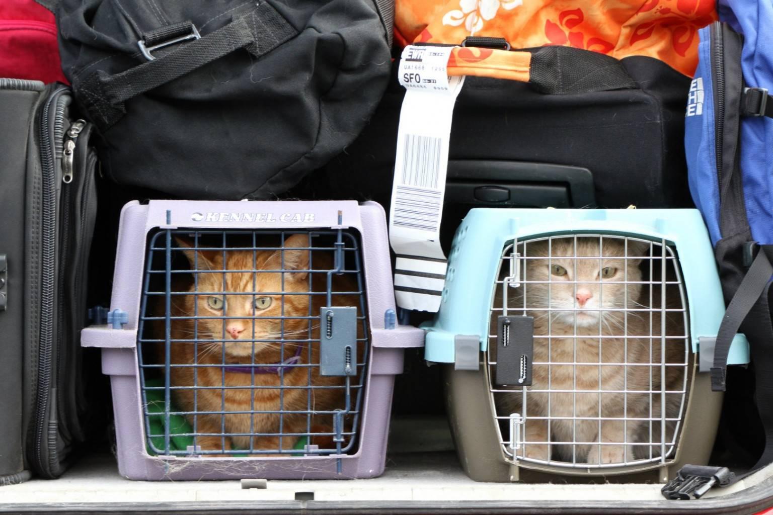 Как перевезти кошку в самолете: размер переноски