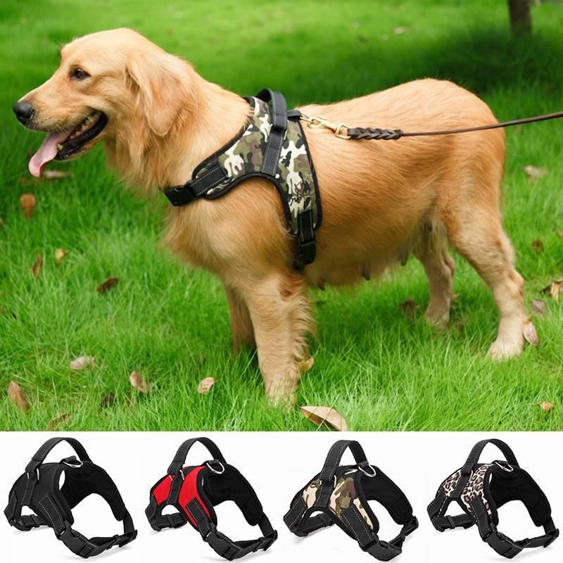 Шлейка для собак: особенности выбора, материалы изготовления