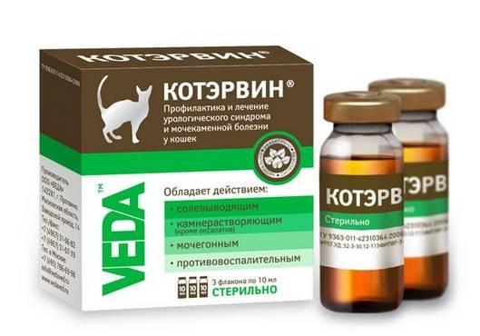 Какие обезболивающие препараты можно давать кошке в домашних условиях - котопес