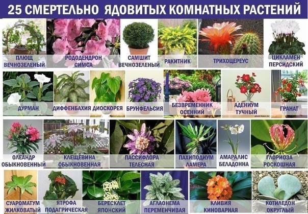 Безопасные и полезные комнатные растения и травы для кошек