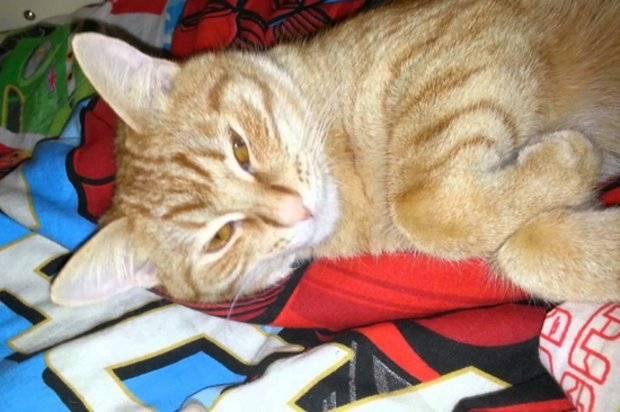 Эпилепсия у кошек и котов - симптомы, лечение, препараты, причины появления   наши лучшие друзья