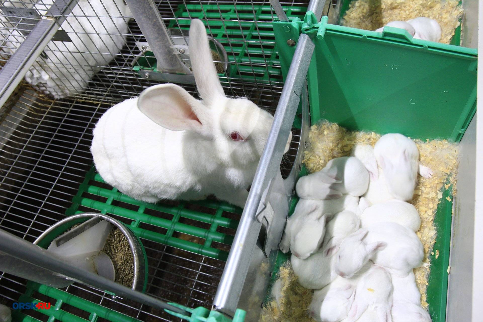 Особенности строительства мини-фермы для кроликов: виды, материалы, изготовление