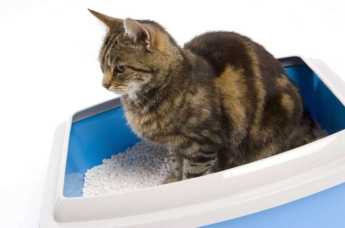 Понос у кошки: причины, лечение и профилактика