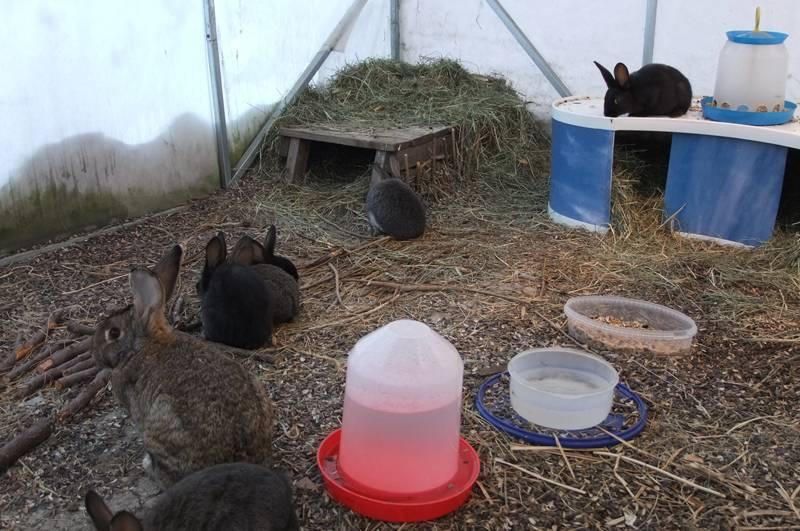 Вольное содержание кроликов