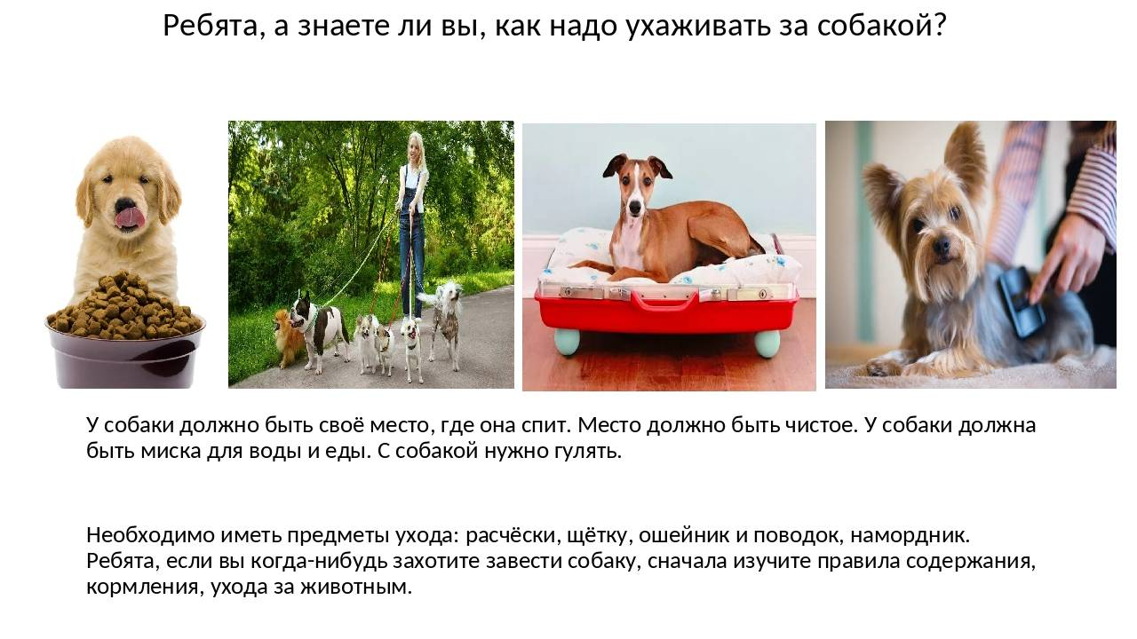 Как ухаживать за щенком – рекомендации заводчиков | dogkind.ru