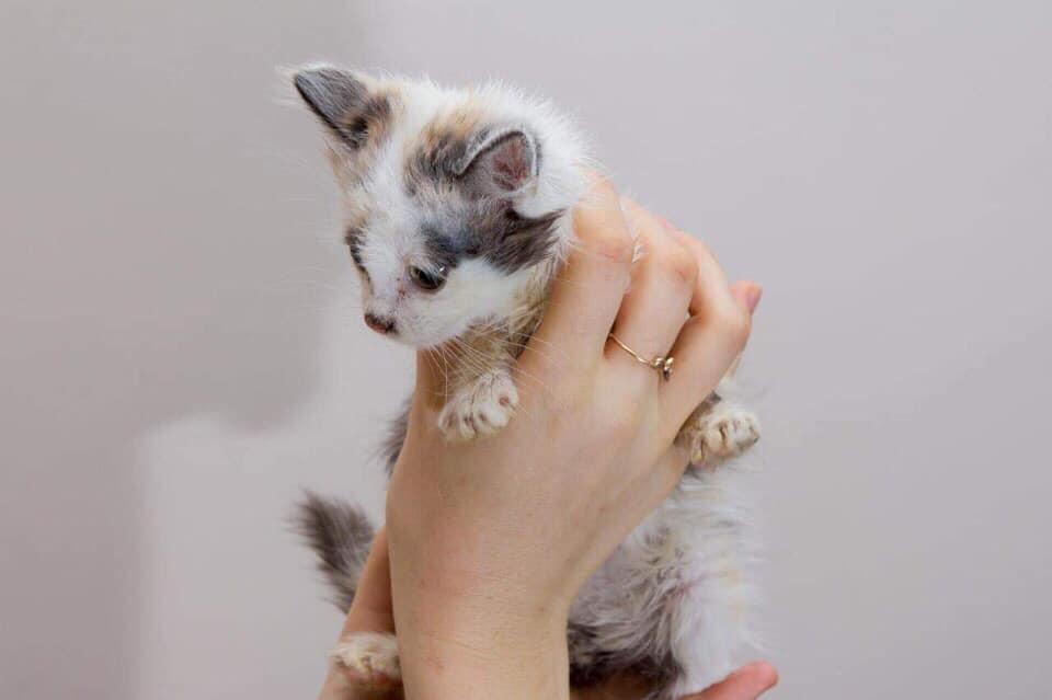 Куда можно пристроить кошку в добрые руки: отдаем котят в специальный приют
