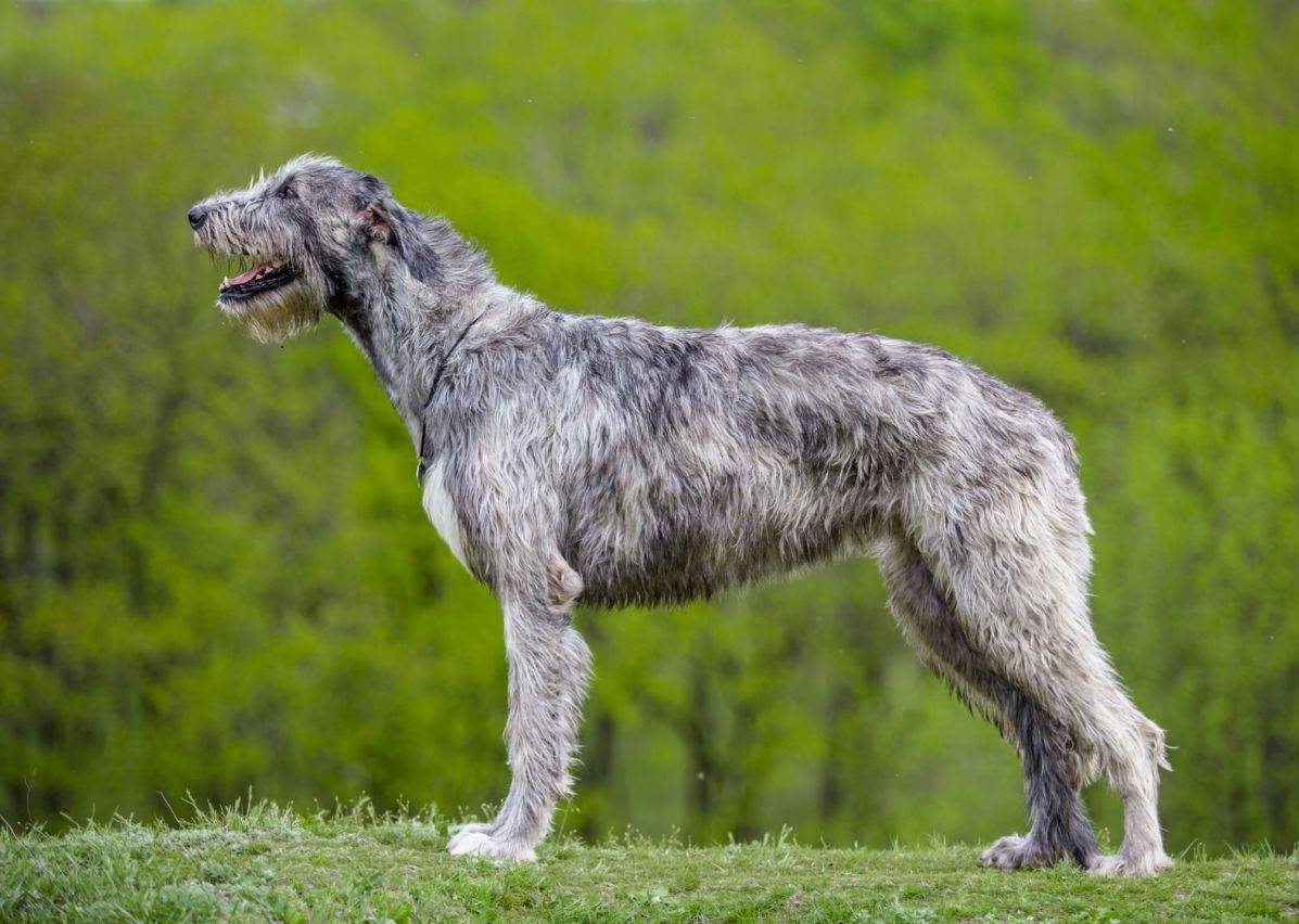 Породы собак: 150 пород с названиями и фотографиями