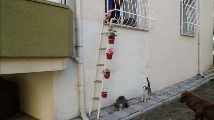 Как правильно взять кошку с улицы ? взяли с улицы котенка ? уход и воспитание