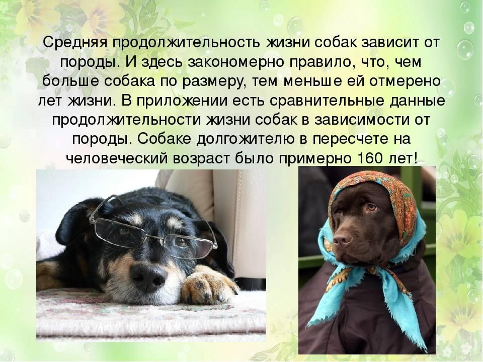 Сколько живут собаки дворняжки и что сделать для улучшения ситуации