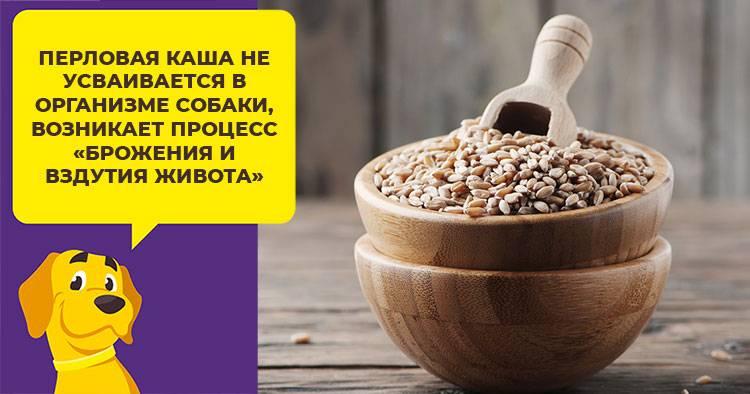 Можно ли собаке пшеничную кашу и крупу, как ее давать питомцу и полезно ли кормить ею