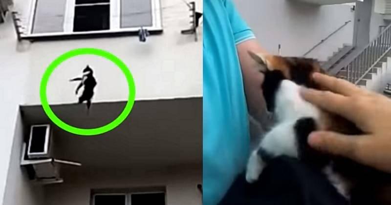 Падение кота с высоты: что делать, последствия, лечение