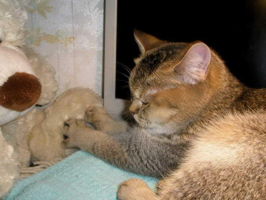 Почему кошки топчут нас лапками: несколько причин милой привычки