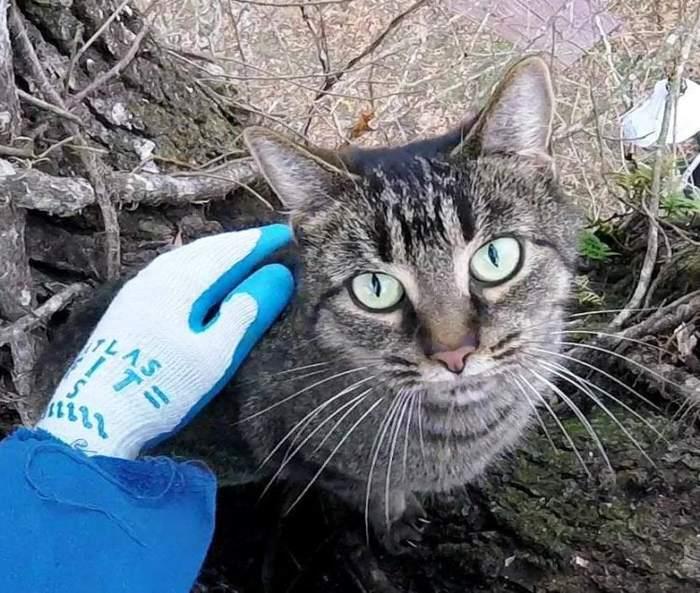 Как снять кошку с дерева: самостоятельно или что делать и куда звонить