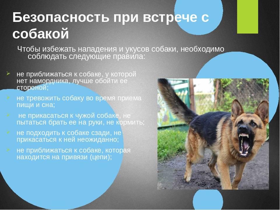 Странных и нелогичных 5 привычек собак с точки зрения человека