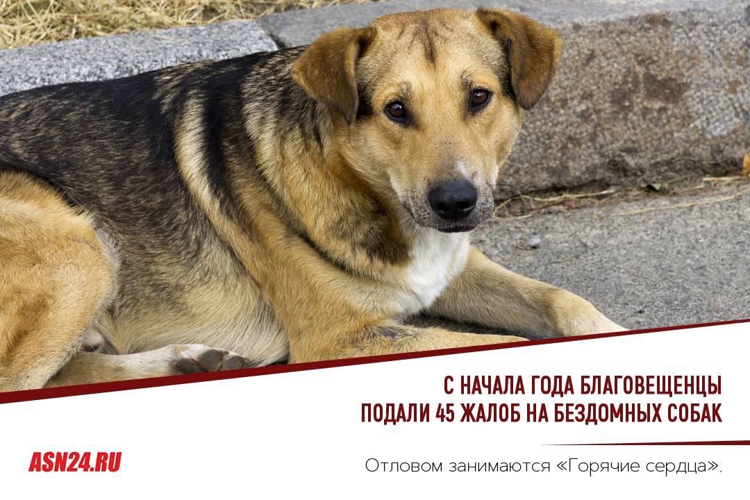 Кто отвечает за отлов бродячих собак, куда обращаться за помощью