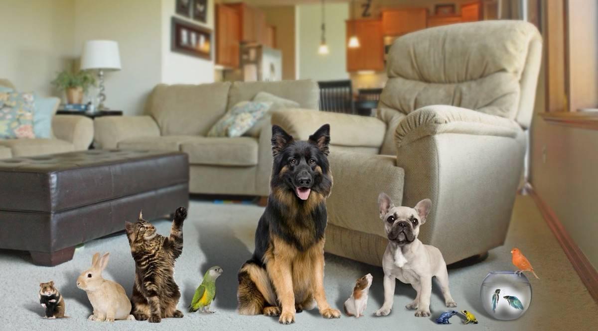 Собаки для квартиры ? топ 60 лучших пород для городской квартиры с отзывами владельцев.