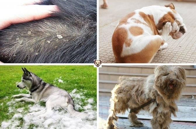 Как часто можно мыть собаку, как часто нужно мыть щенка