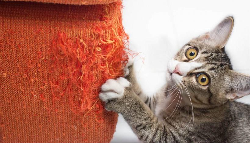 Кот точит когти об диван. как отучить кошку драть мебель и как защитить мебель от когтей питомца? пресечение нежелательного поведения - новая медицина