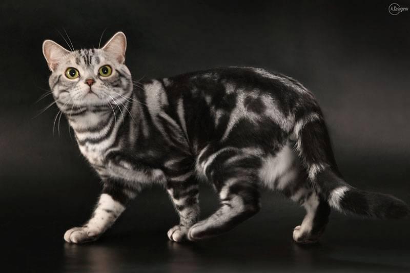 Имена для серых котов и кошек