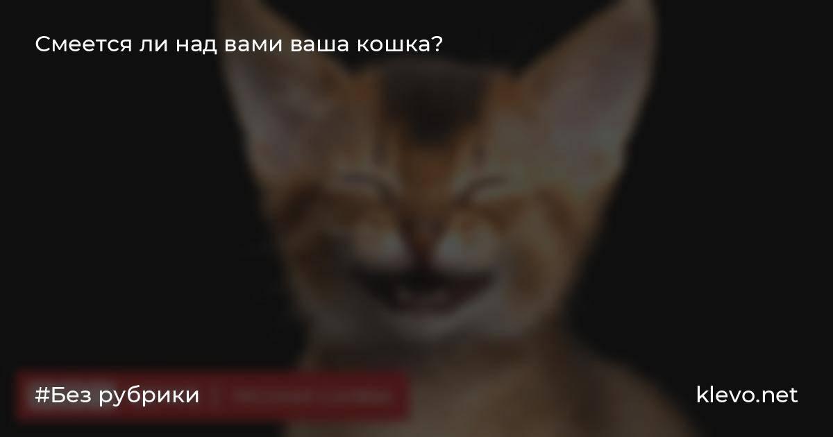 Умеют ли собаки улыбаться и смеяться? | ilike.pet | яндекс дзен