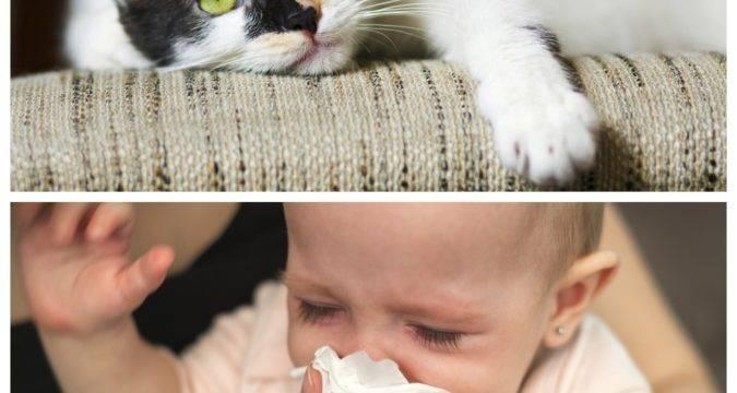 6 способов снизить аллергическую реакцию на кошек - лайфхакер