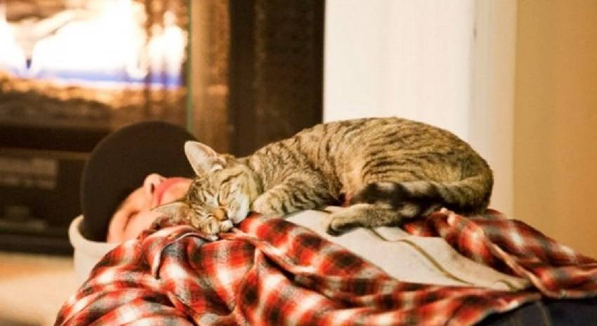 Почему кошки спят в ногах | у хозяина или хозяйки