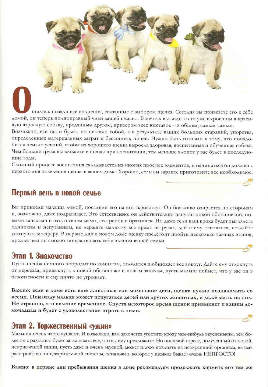 Топ-36 лучших собак для квартиры   dogkind.ru