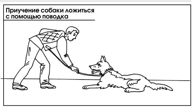Правильная дрессировка собаки команде «ко мне». как научить собаку команде «ко мне»
