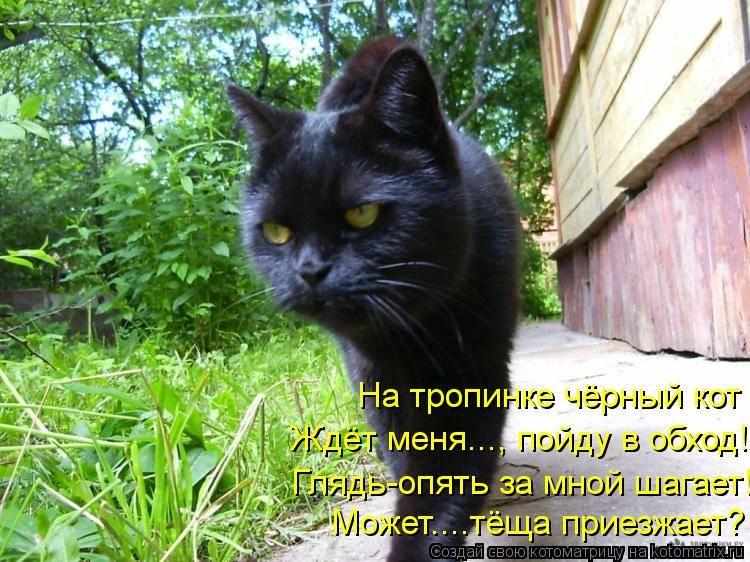 Стоит ли заводить черную кошку в доме, хорошо это или плохо, что она приносит: приметы и суеверия