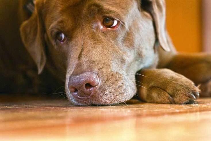 Почему собака воет: все возможные причины и способы устранения проблемы