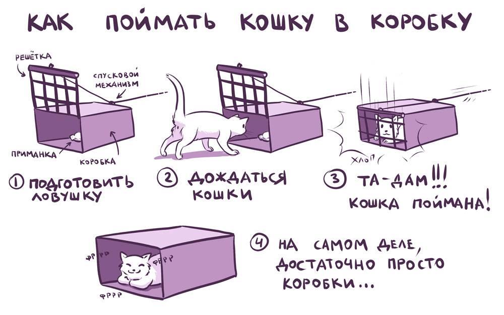 Что делать, если кошка потерялась на даче? как найти кота на даче