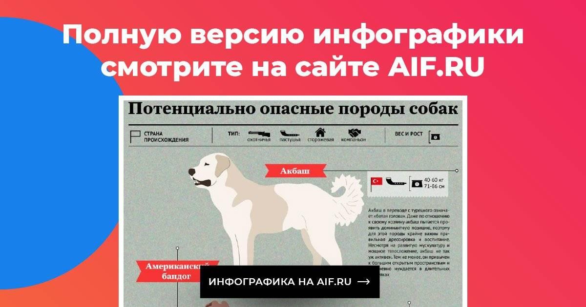 Какие запрещенные породы собак есть в россии