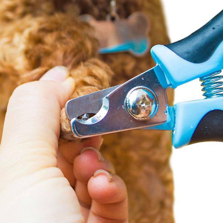 Ножницы для стрижки когтей у кошек и котов