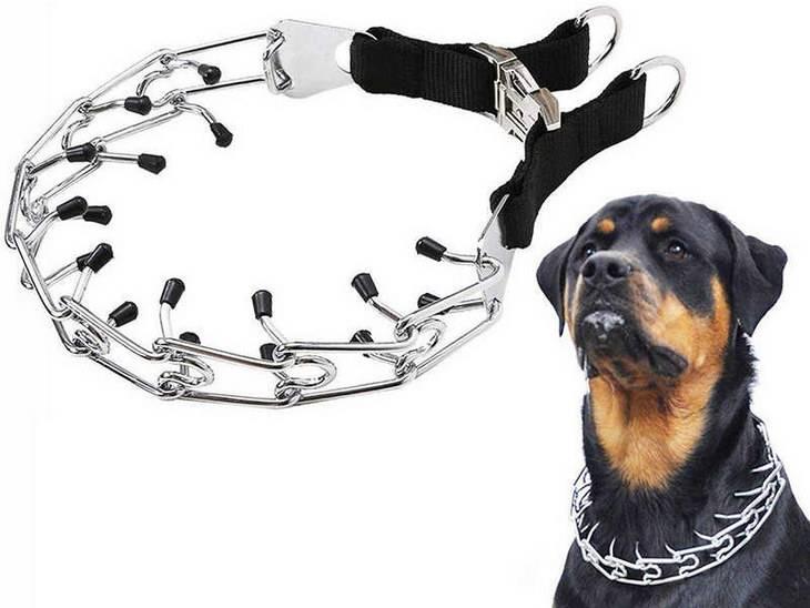 Строгий ошейник для собак (больших и маленьких): как пользоваться?