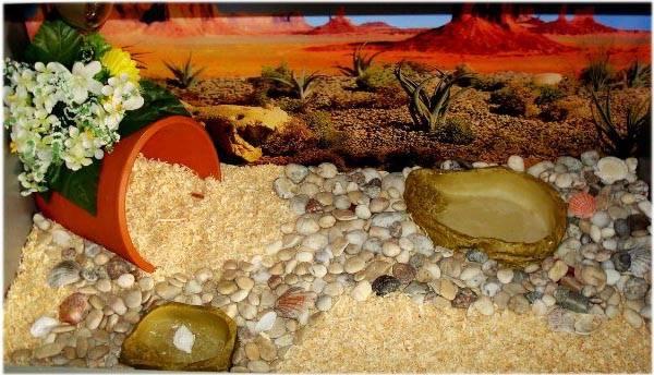 Рекомендации по выбору террариумов для сухопутных черепах. какие должны быть температура и свет? - твой питомец