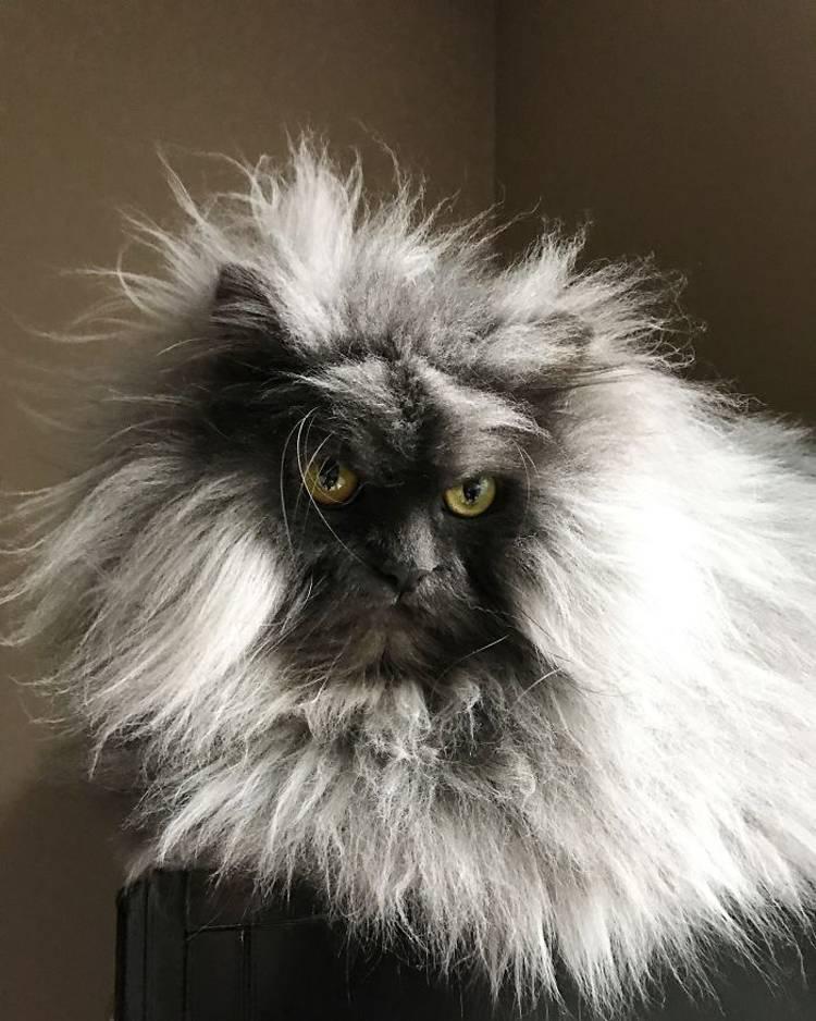 Самые красивые породы кошек в мире: фотографии и названия