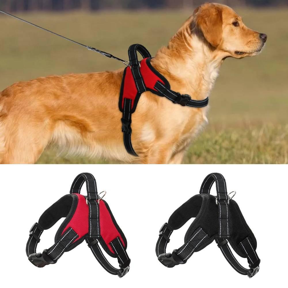 Шлейка для собак - обзор изделий для мелких, средних, крупных пород с описанием и ценами