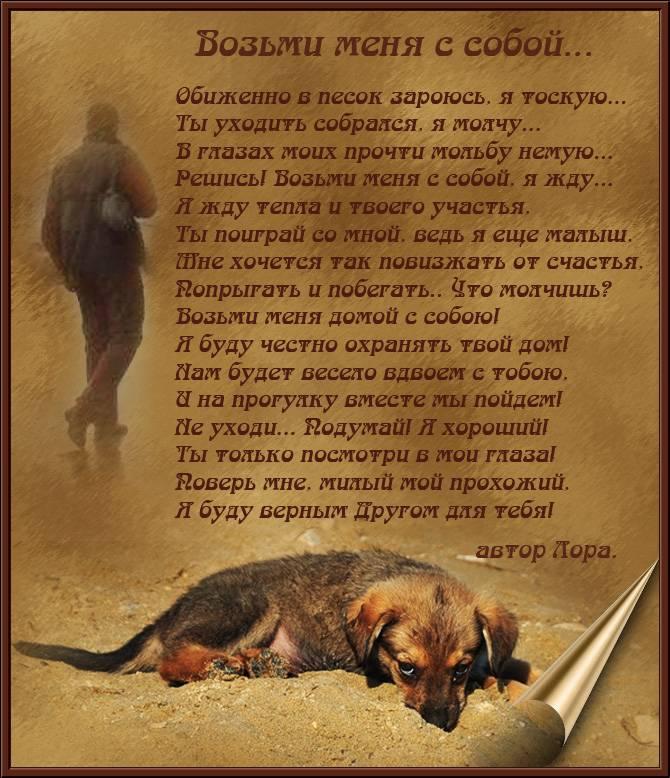 Виды агрессии у собак, причины и способы устранения