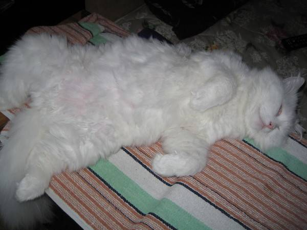 У кота внизу живота два мешочка