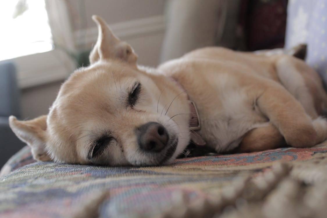 Как отучить собаку спать на кровати с хозяином, лазить на диван – методы