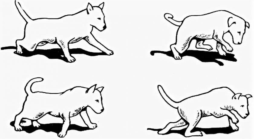 Атаксия у кошек: причины, симптомы, диагностика и лечение