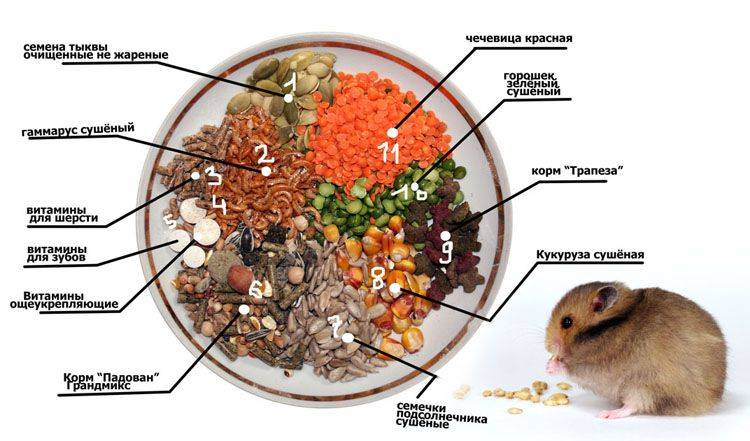 Что едят джунгарики — список полезных и вредных продуктов