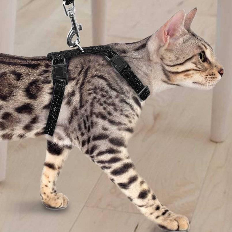 Шлейка для кота: как одевать, какие бывают поводки, как приучить кошку к шлейке