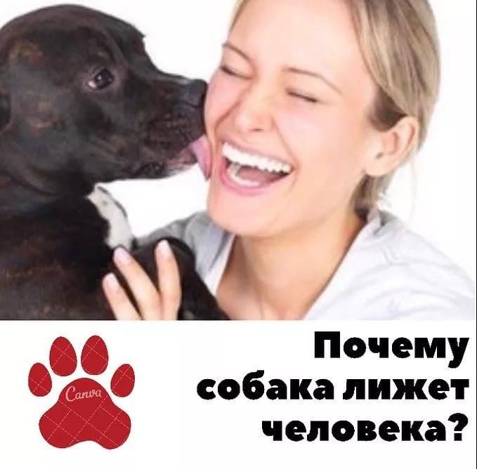 Что происходит, когда собака облизывает ваше лицо