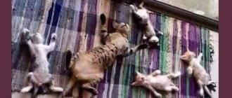 Кот ложится на руку. если кошка спит в вашей постели, что это значит? действительно ли кошки лечат человека, лёжа на нём