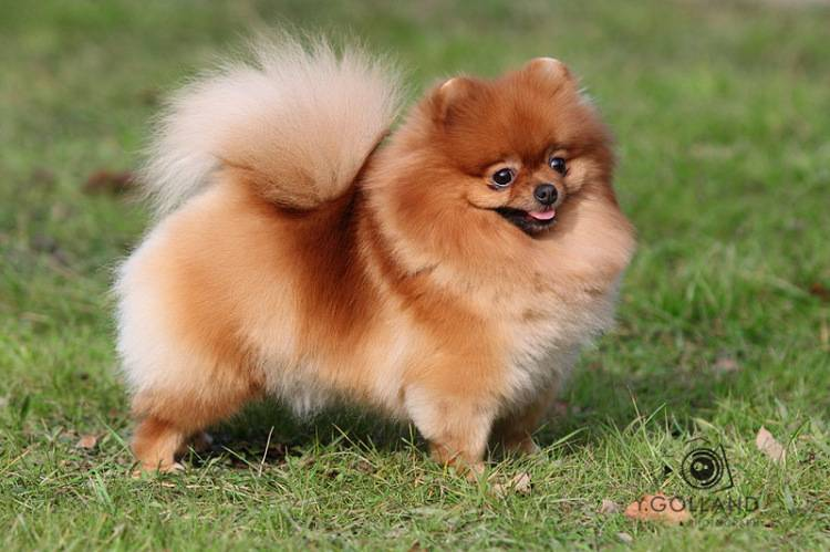 Как назвать собаку-мальчика йорка, как назвать маленькую собачку-девочку