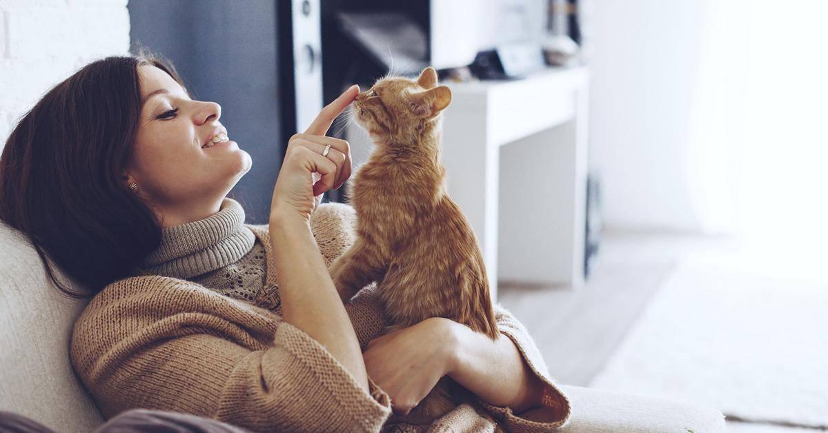 Кошки воспринимают хозяев как своих родителей - hi-news.ru